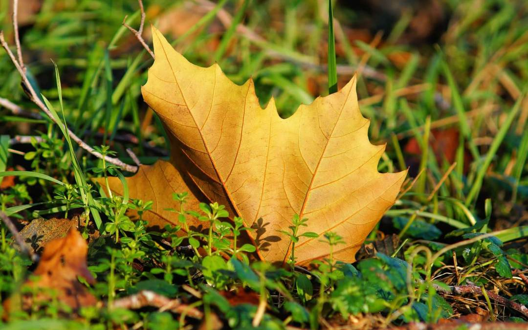 4 ways to take care of your lawn before winter arrives