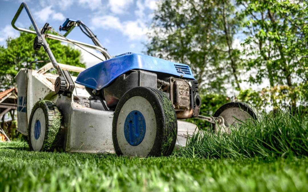7 important tips to start your lawn off right this spring
