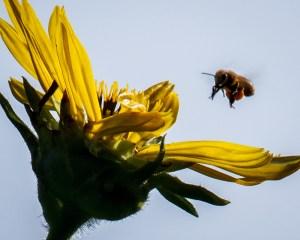 MBates - Pollination Patrol