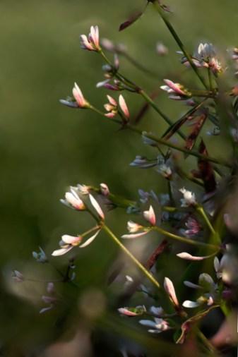 small flowers seeking sun