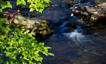 Mary Mehl - downstream