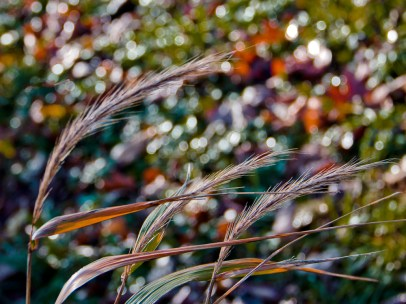 Mary Mehl - grass