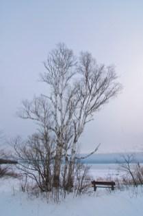 536-02 Birch Sky Morning