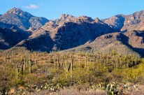 Chuck Hunnicutt - Sabino Canyon-10