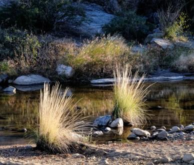 Chuck Hunnicutt - Sabino Canyon-6