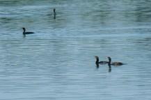Layers of Cormorants