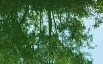 Reflections in Green