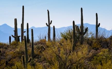 Chuck Hunnicutt - Saguaro NP-1