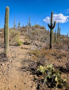Chuck Hunnicutt - Saguaro NP-10
