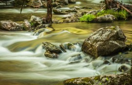 Middle Prong River III