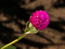 MLake 1.Pink-XGA