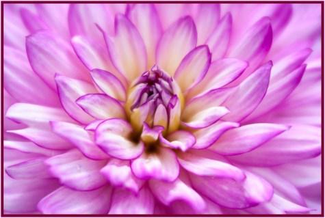 Gail Chastain - Rotary Gardens Janesville, WI