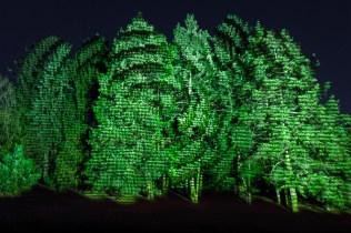 TreeMagination