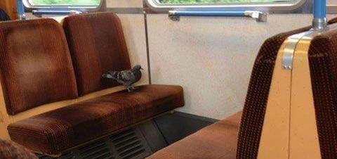 De ce sa zbori cand poti sa mergi cu trenu