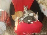 Vizita in sat - 24 iulie 2013 - caini si pisici - 18