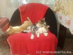 Vizita in sat - 24 iulie 2013 - caini si pisici - 22