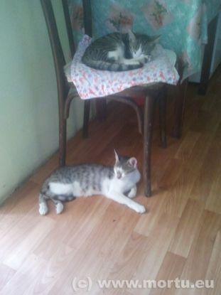 Vizita in sat - 24 iulie 2013 - caini si pisici - 7