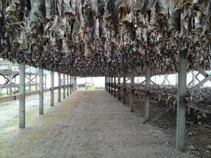 Stockfish Norvège