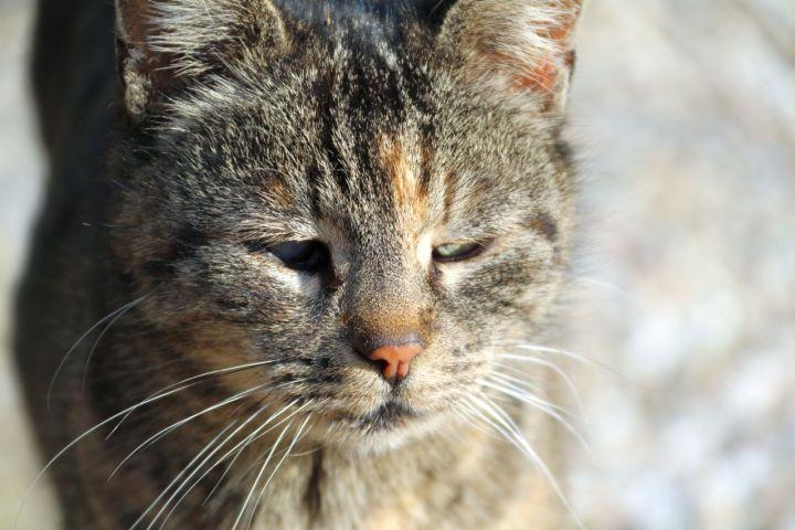 Grumpy-unsere kleine Streunerin