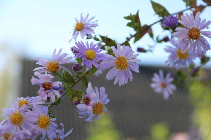 Hofrundgang Oktober – Abschlussarbeiten müssen sein