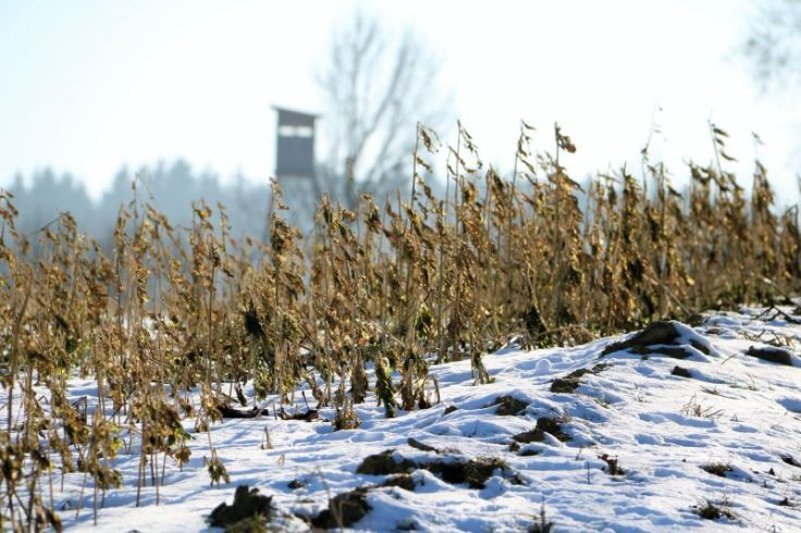 2017_01_innviertel_im_winter_15