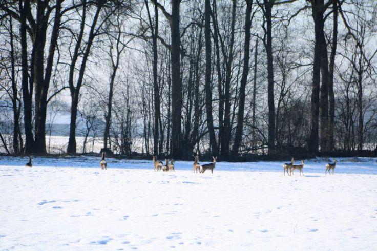 2017_01_innviertel_im_winter_25