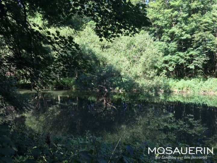 2017-08-mosauerin-tour-kirchdorf und geinberg-07