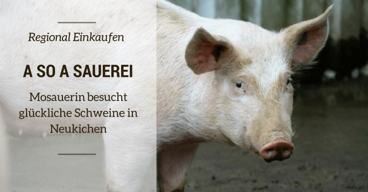 Regional & fair Einkaufen: Glückliche Schweine im Innviertel