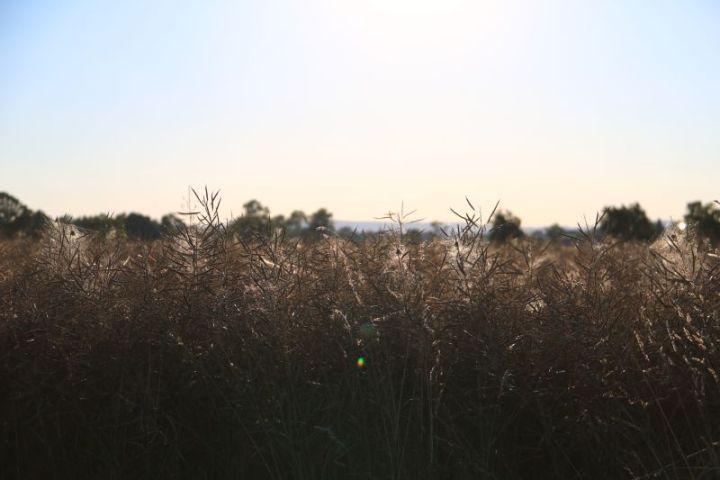 2018 07 mosauerin sommer innviertel getreide 09