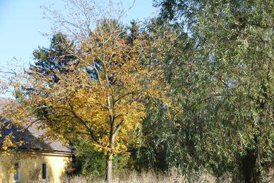 201910 mosauerin innviertel blog hofrundgang oktober 30