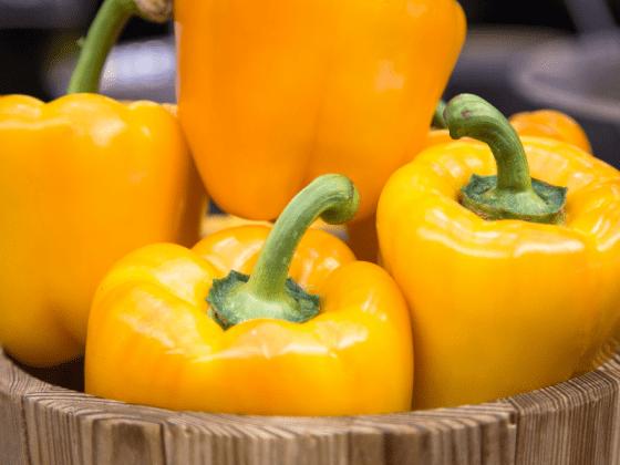 paprika gelb mosauerin shop wurzgarten (5)