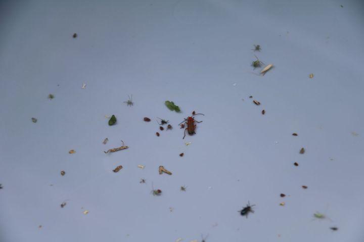 insektencheck mosauerin innviertel