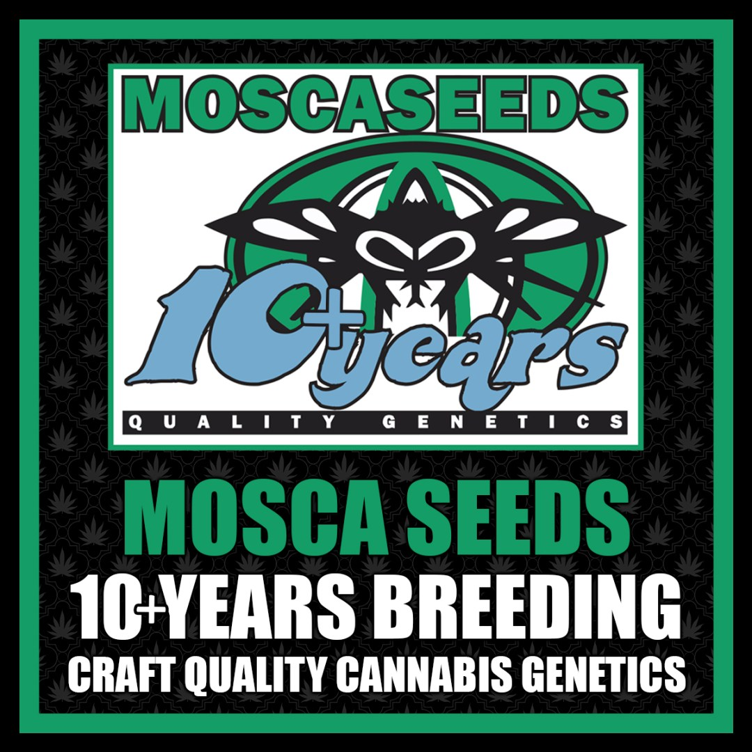MOSCA SEEDS -Always FLY With Quality!