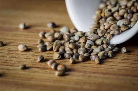 Seed Image_Mosca Seeds