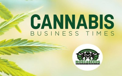 Mosca Seeds Featured in Cannabis Business Times