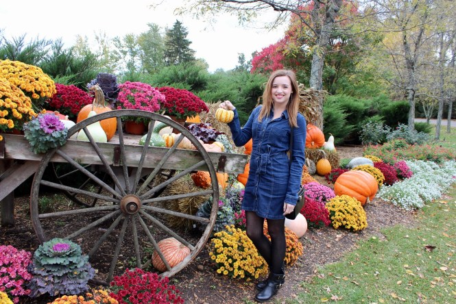 Gervasi pumpkin patch