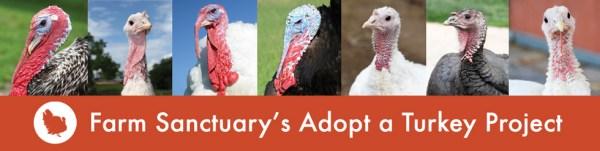 farm sanctuary adopt a turkey