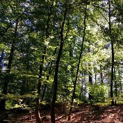 Meulenwald Schweich