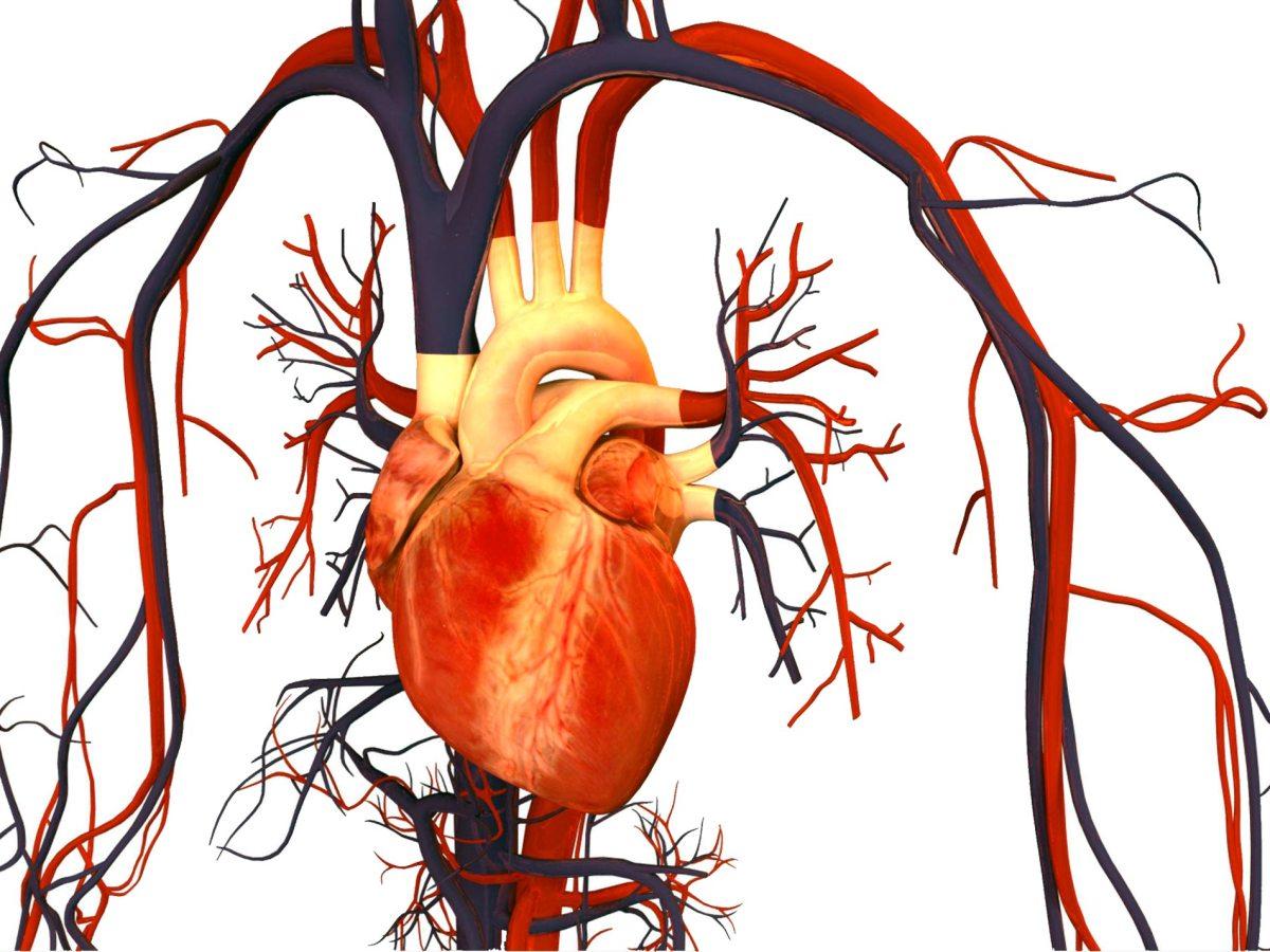 heart - Бемпедоевая кислота: сильный удар по атеросклерозу