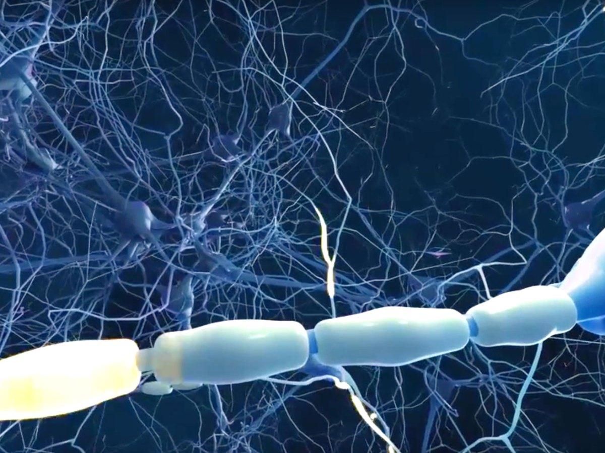multiple sclerosis - «Вумерити»: улучшенная версия «Текфидеры»