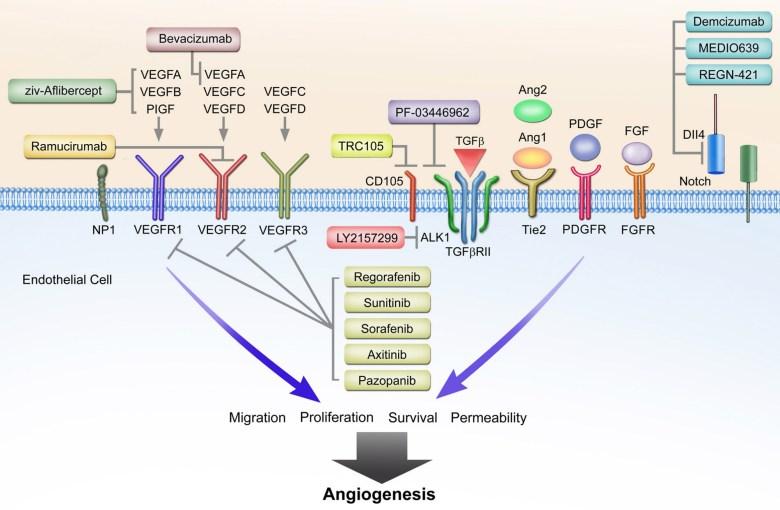«Цирамза»: грядущее лечение рака печени с высоким уровнем альфа-фетопротеина