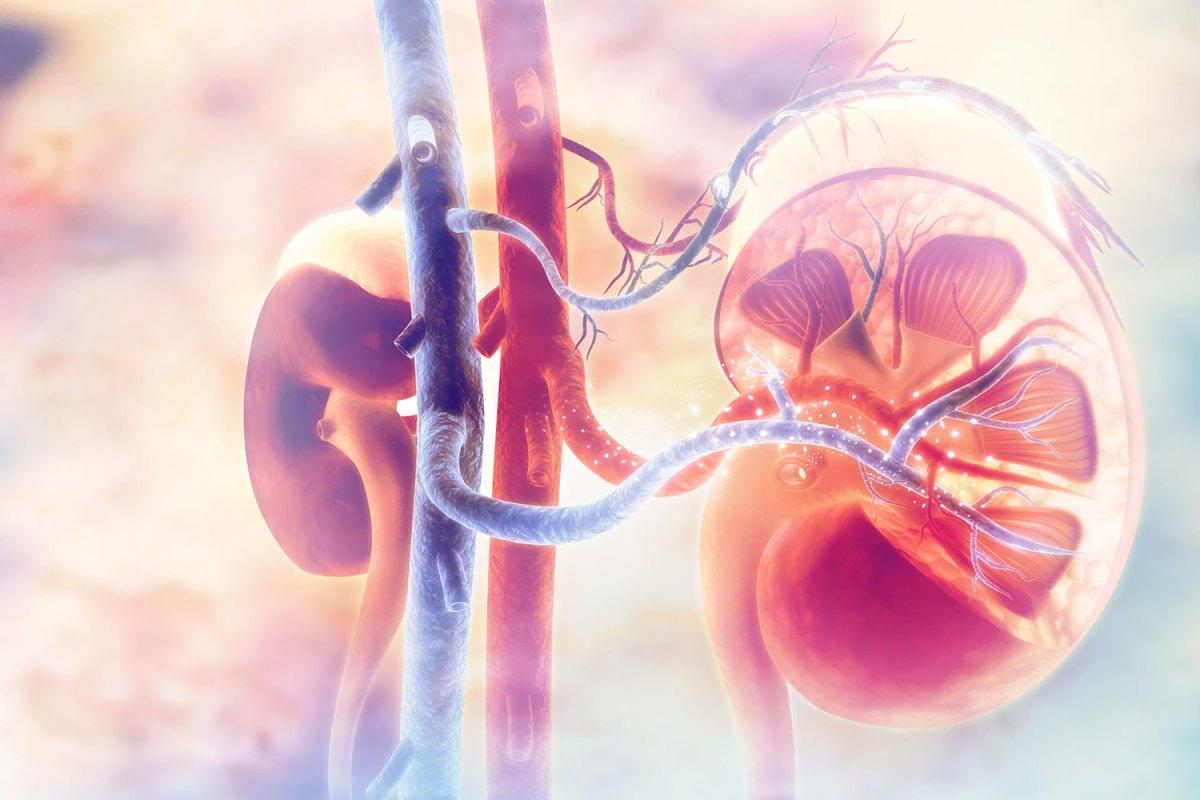 «Китруда» плюс «Инлита»: новый стандарт первоочередного лечения распространенного рака почки