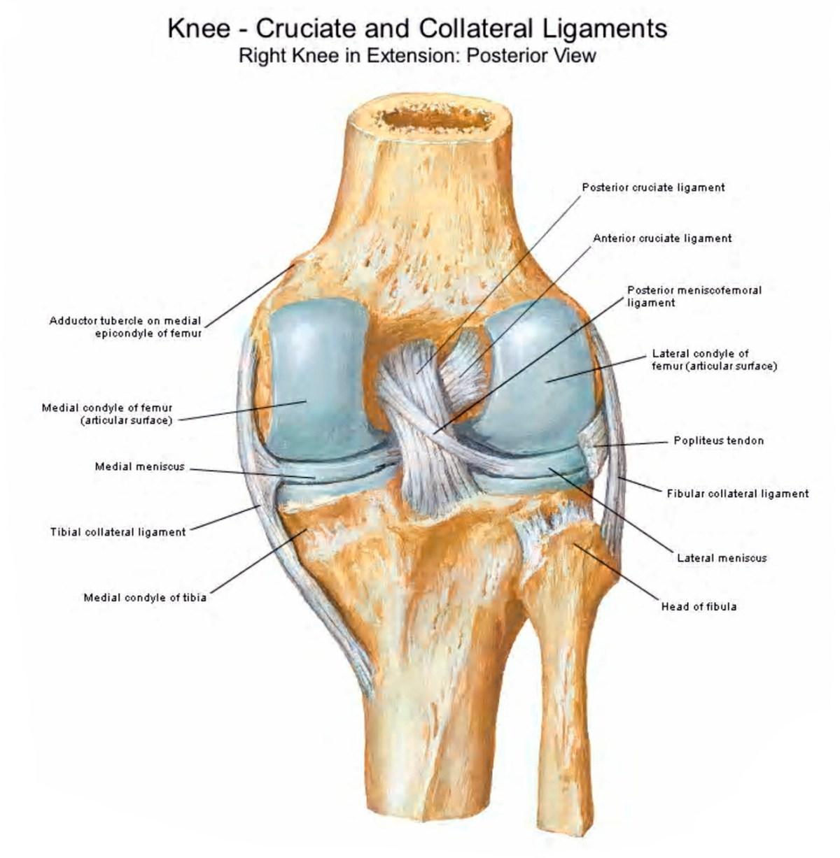 Танезумаб против боли при остеоартрозе: опасный блеск