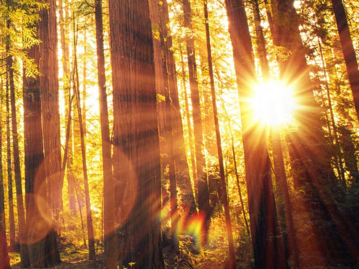 sun - «Сенеси»: лекарство при эритропоэтической протопорфирии
