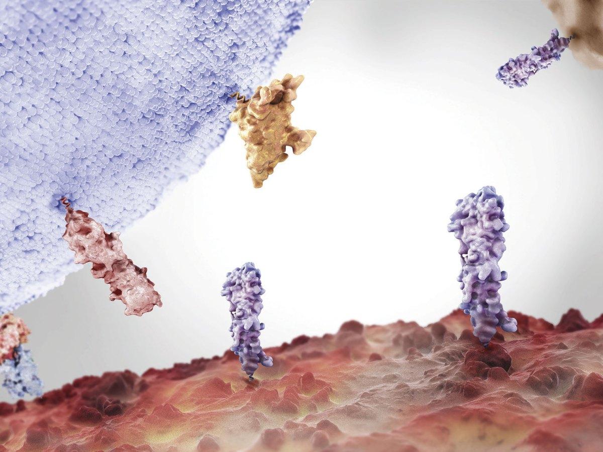 «Тецентрик» плюс «Авастин»: иммуноонкологическое лечение гепатоцеллюлярной карциномы