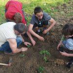 20160521 172617 e1467707404886 - Utworzyliśmy nasz szkolny ogródek warzywny