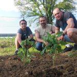 20160521 173237 e1467707307624 - Utworzyliśmy nasz szkolny ogródek warzywny