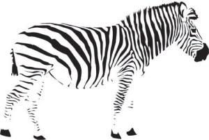 zebra closure principle in Gestalt Theory