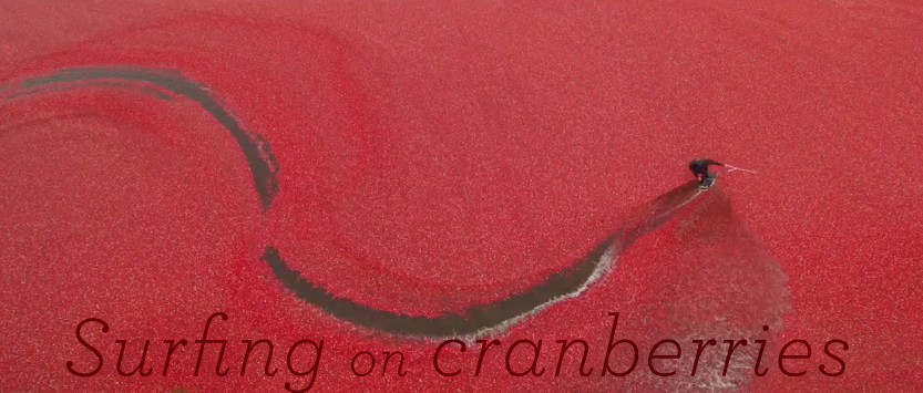 surfingOnCranberries