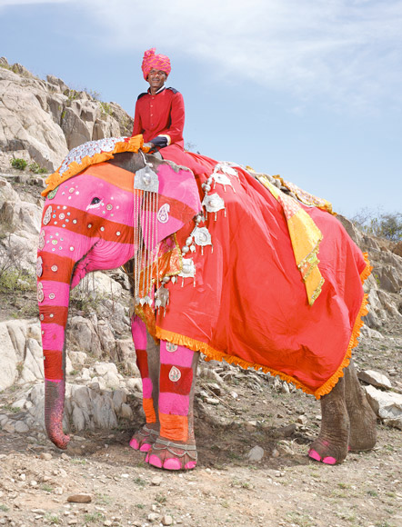 02-india-elephant-painted-pink-red-stripes-580v
